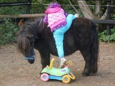Wow can't believe the pony's that nice Horse Girl, Horse Love, Pony Horse, Pretty Horses, Beautiful Horses, Horse Pictures, Animal Pictures, By Any Means Necessary, Funny Horses