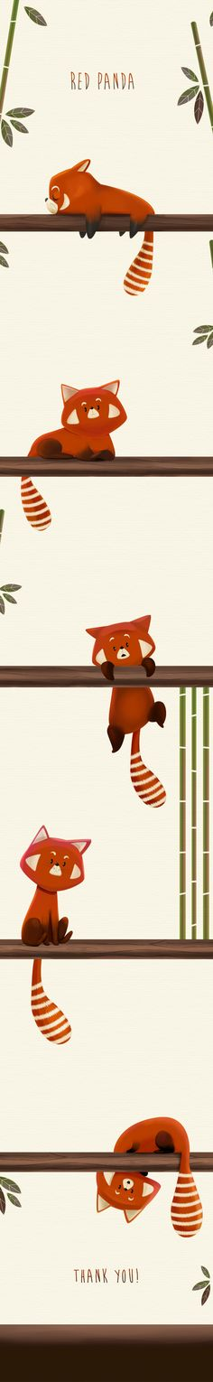 Red Panda on Behance