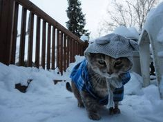 �Not even a laptop can save me now.� | 16 Cats Who Are Already Sick And Tired Of The Winter