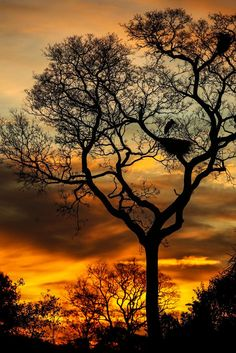 Pôr-do-sol no Pantanal. O Complexo do Pantanal foi considerado pela UNESCO…