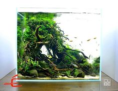 Aquarium Care for the Freshwater Guppy Guppies are maybe the most popular type of freshwater fish to keep in a fish tank. Guppies are sturdy fish that can Planted Aquarium, Betta Aquarium, Tropical Fish Aquarium, Home Aquarium, Aquascaping, Freshwater Plants, Freshwater Aquarium, Aquarium Design, Best Aquarium Filter