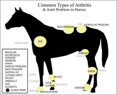 Lameness in Horses, Lame Horse Veterinary Advice - How to discover where damage occurs in a lame horse, and how to fix it
