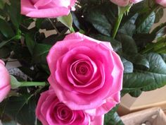 My lovely pink roses