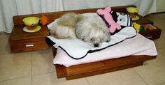 Cedel Pets & Style contemporary dog furniture.