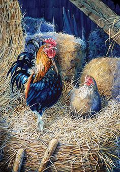 Shop online for canvas art prints, posters, cards of PRIZED ROOSTER watercolor painting of rooster and hen in barn direct from artist Hanne Lore Koehler. Rooster Painting, Rooster Art, Rooster Decor, Chicken Painting, Chicken Art, Chicken Signs, Hen Chicken, Watercolor Animals, Watercolor Paintings