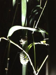 Frog and caterpillar
