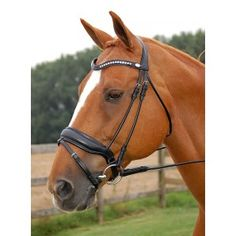 Dressage Bridle - Bridles - Bridles - Everything for the horse - horse scene