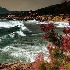 Bucht von San Moll / Cala Ratjada