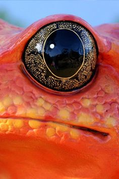 frog's eye - so beautiful, it looks like golden embroidery or gilded inlay around an onyx stone.