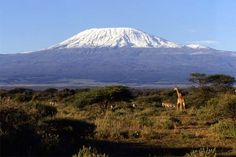 Wings of Kilimanjarois a once in a lifetime, world record breaking attempt. 200 adventurers from around the world will gather in Tanzania, Africa where they will climb Mt. Kilimanjaro. Kilmanjaro …