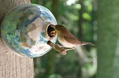 Hey, I found this really awesome Etsy listing at https://www.etsy.com/listing/69726785/pottery-birdhouse-bottle-for-wrens