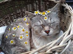 """coltre: """"Eu cobri meu gato nas flores"""""""