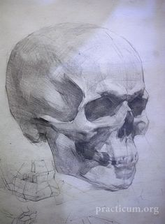 classical figure drawing and the contemporary realism of hedwardbrooks: Skull Studies, Russian Academy