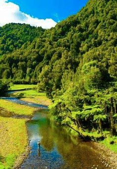 Fly Fishing. Awakino River - New Zealand. Beautiful place to fish in the North Island sea