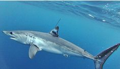 After record year, shark attacks likely to decline in 2016