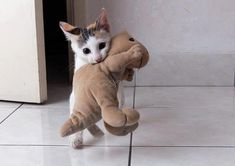 The toy is almost as big as the tiny kitty!! Precious.