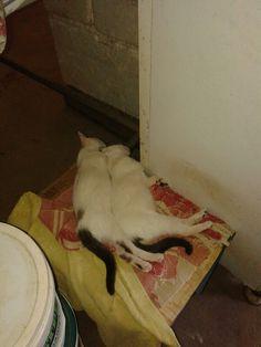 Meus gatinhos dormindo. Muito fofo.