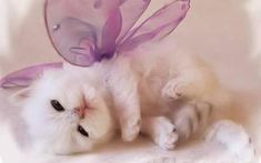 kittens   Cute Kitten Wallpaper - Kittens Wallpaper (16094693) - Fanpop fanclubs