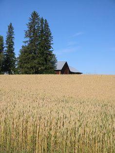 Fields in Finland, Looks just like our Farm in (new) Tapiola, MI