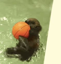 The adorable rescued baby otter is back and this time it's playing basketball!