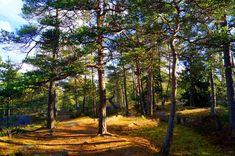 https://flic.kr/p/NDjjAr   Forest in Finland