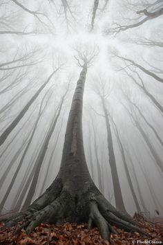 Los bosques surrealistas de Rumanía
