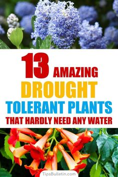 Discover 13 colorful drought-tolerant plants for your front yard or flowering pots. Perfect for garden containers and front yards in zone 5 hot areas like California, Texas, Arizona, Nevada or New Mexico. The perfect perennials for full sun conditions. Drought Resistant Plants, Drought Tolerant Landscape, Texas Plants Drought Tolerant, Texas Landscaping, Front Yard Landscaping, Landscaping Ideas, Landscaping Software, Front Yard Gardens, Indoor Gardening Supplies