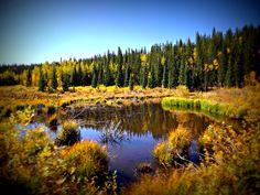 Beaver pound at Kenosha Pass in Colorado