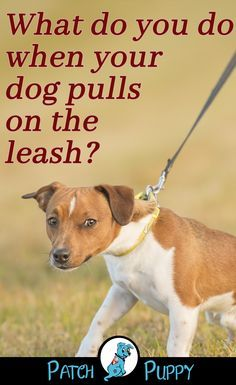 """What do you do when your dog pulls on the leash? Do you pull back? Do you let them lead you? Our post """"Finally Get Your Dog to Stop Pulling! / How to stop leash pulling"""" can help you learn how to stop leash pulling with your dog! Source by miss_babushca Dog Training Treats, Leash Training, Training Your Puppy, Dog Training Tips, Training Collar, Agility Training, Training Videos, Training Classes, Training Equipment"""