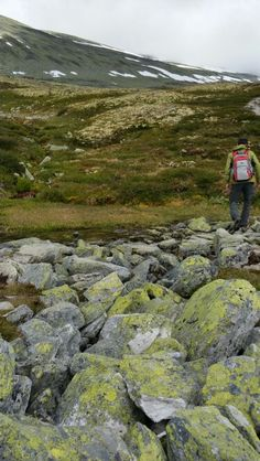Hiking in Norway #Rondane