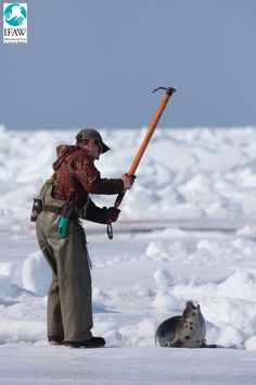Canada:  killing baby seals for an out dated and out of time fur industry! Learn a new trade and earn some respect!