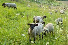 Förderungsmöglichkeiten für ökologische Landwirtschaft in Deutschland
