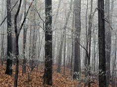 fondo de pantalla de bosques: http://wallpapic.es/paisajes/bosques/wallpaper-28724