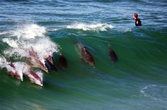 Dolphins showing surfer-boy how to surf | Bronte Beach, Sydn… | Ebroh | Flickr