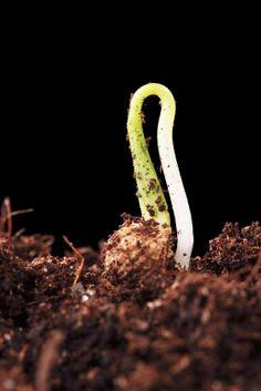 Make your Own Vegetable Seed Starting Soil