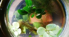 What is a planted aquarium bowl? Although some gardeners choose to add a small sponge filter, a plant bowl is a small, usually unfiltered, unheated and very densely planted version of an aquarium. A planted bowl doesn't contain any fish and is more of a little indoor garden than a fish tank. They are simple and don't require as much maintance as a real aquarium, which makes them great for both fishkeepers and people who are more interested in regular gardening.