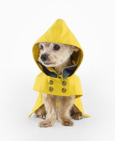 Ralph Lauren Dog Raincoat by drollgirl, via Flickr
