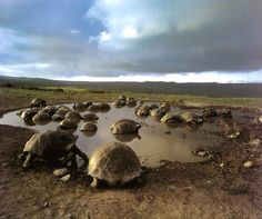 An opportunity to retrace Darwin's steps & explore the Giant Tortoises of Galapagos Islands would be incredible!
