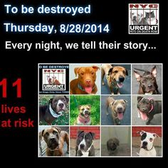 TO BE DESTROYED - 08/28/14 PITTIES ARE IN DANGER AGAIN. THERE ARE FAR TOO MANY TODAY!!! ALL THESE DOGS COUNT ON US!!! LET'S NOT LET THEM DOWN!!! PLEASE OPEN YOUR HEARTS AND PLEDGE, TAKE THEM HOME, BUT BE QUICK AS TIME IS TICKING AWAY. PLEASE BE QUICK WHEN MAKING UP YOUR MIND!!  https://www.facebook.com/Urgentdeathrowdogs/photos/a.611290788883804.1073741851.152876678058553/861491250530422/?type=3&theater