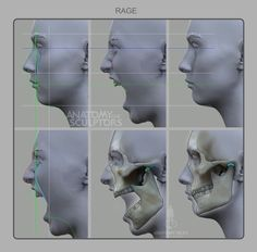Head & Neck Anatomy: A Book With 3D Augmented Reality by Sandis Kondrats — Kickstarter