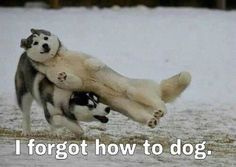 Broken Dog: | 36 Dog Pictures On The Internet That Are Never Not Funny