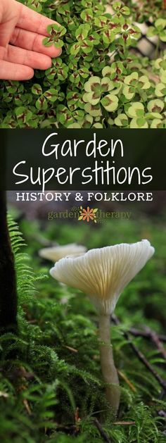 Garden Superstitions History and Folklore