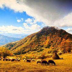 Pastoral. Bulgaria.