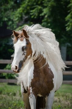 Little Miss America is a lovely mare, so refined and feminine, photo by Jamie Mammano
