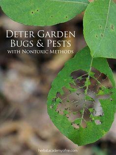 Natural Methods to Deter Garden Bugs and Pests - garden series!
