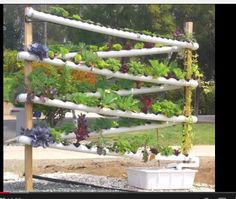 How to Start a Homemade Hydroponic Garden. Hydroponic gardening means growing plants in a water-based system. There are many types of hydroponic gardening systems, and some systems are more complex than others. Vertical Hydroponics, Hydroponics System, Hydroponic Gardening, Organic Gardening, Container Gardening, Vertical Planter, Aquaponics Diy, Vertical Gardens, Farm Gardens