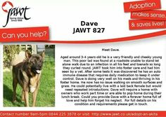 Delightful Dave is in need of a home # Akita #JAWT