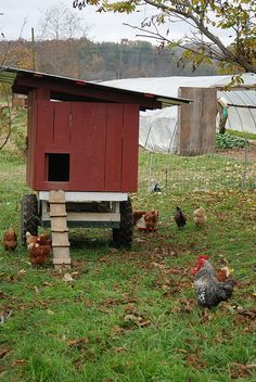 Warren Wilson College chicken tractor, via Flickr