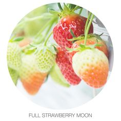Taking notice of the hard work it takes to ripen and offering gratitude Full Strawberry Moon, Strawberry Bush, Strawberry Fields Forever, Full Moon June, Santa Maria Valley, Small Victories, Plant Needs, Gratitude, Harvest
