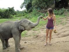 baby elephant in thailand!